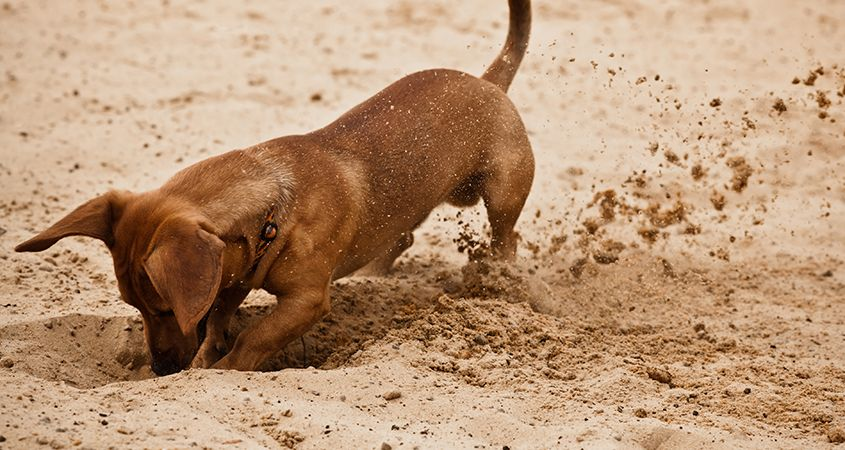 Stop Digging Up Bones! Less Is More In The Job Search.